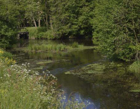 petite rivière et ses berges naturelles