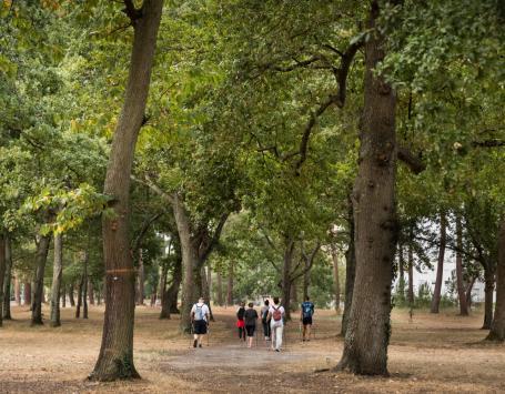 La photo montre des randonneurs dans le bois de Saige