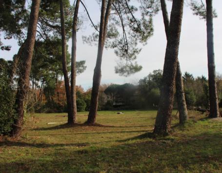 Boisements de pins au Pontet