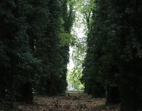 Perspective de l'entrée de la poudrerie vers la jalle, plantation d'alignement de platanes