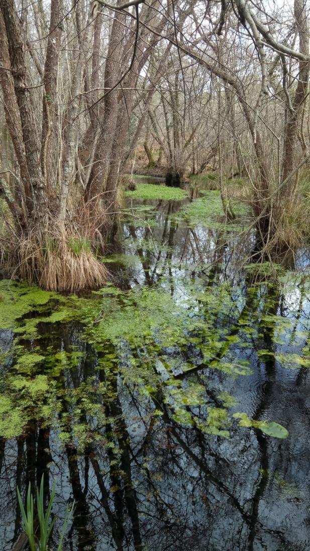 Jalle de Bonneau Zone Humide biodiversité