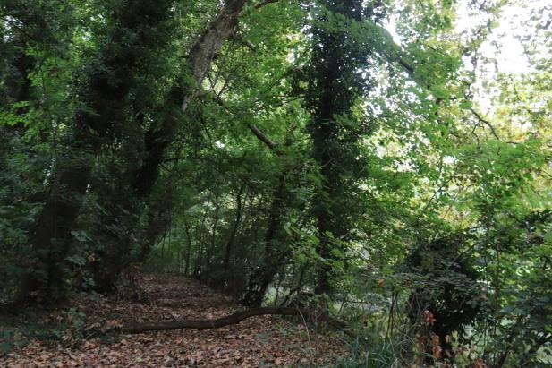 Chemin ombragé en bords de jalle sur la presqu'île